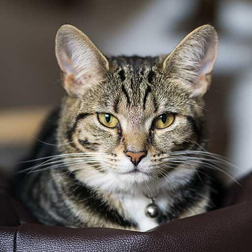 Pet Sitting Nottingham - Cat Sitting