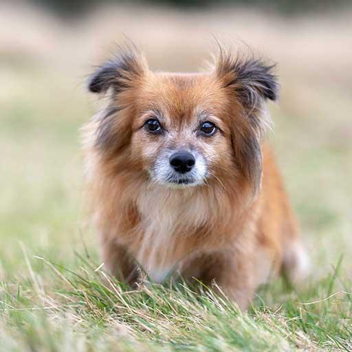 Dog Walker Nottingham - Jake