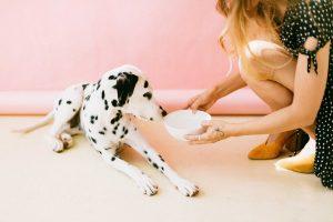 Pets Bowl - Dog Bowl